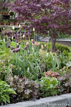 Hr r en fin ide till - Purple Garden, Colorful Garden, Back Gardens, Garden Styles, Dream Garden, Backyard Landscaping, Garden Inspiration, Beautiful Gardens, Garden Plants
