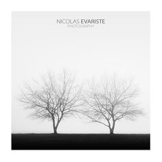 Black and white lonely trees in the mist by Nicolas Evariste