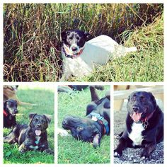Relaxing in the shade. #evasplaypupspa #dogcamp #doggievacays #badassbk #adoptdontshop #dogsinnature #dogdaysofsummer #dogsofinstagram #endlessmountains #mountpleasant #PA #pennsylvania