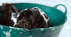 ¿Por qué huele mal tu perro?