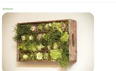 Old wooden crate succulent wall planter Vertical Succulent Gardens, Vertical Garden Diy, Succulent Wall, Succulents Garden, Succulent Display, Vertical Planter, Hanging Succulents, Hanging Plants, Garden Art
