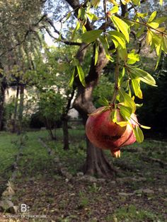 The #garden - From here you can go downtown in 15 minutes (by car or local bus), but the most relevant value is that you can reach the #seaside in 5 minutes walking  -#Villa for sale in Genoa Italy