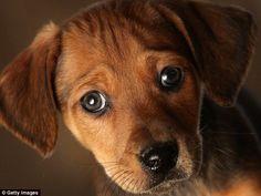 Conoce la razón por la que regalar un perro no es buena idea: PROFECO