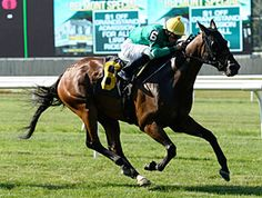 After defeating other New York-breds on the lead in his previous start, King Kreesa replicated that front-running effort against open company in the $150,000 Poker Stakes (gr. IIIT) July 4 at Belmont Park to secure the first graded stakes win of his career