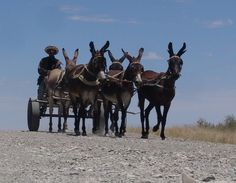 Donkey cart  - #Namibia #Africa #Transport