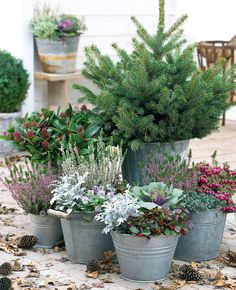 Beautiful Outdoor Winter Container Gardening Design Ideas - House and home Winter Container Gardening, Indoor Gardening Supplies, Container Plants, Gardening Tips, Beautiful Gardens, Beautiful Flowers, Winter Planter, Design Jardin, Winter Garden