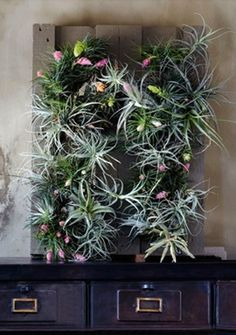 hanging succulents and air plants