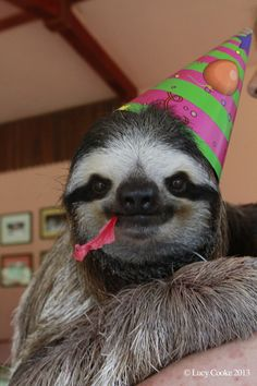 Lucy wants us all to celebrate sloths. | The 29 Cutest Sloths That Ever Slothed