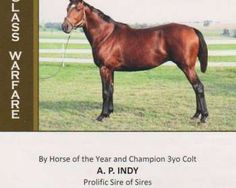 Class Warfare(2009)(Colt) A.P. Indy- Take D'Tour By Tour D'Or. 3x4 To Secretariat, 4(C)x5(C)x5(F) To Bold Ruler, 5x5 To Nasrullah. 3 Starts Unplaced. $1,335. Entered Stud In 2014.