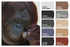 """""""Kisses"""" Color Palette Inspiration for exterior craftsman home paint color scheme, stone accent colors, shingle choice, and landscaping details. Chip It! by Sherwin-Williams – Home"""