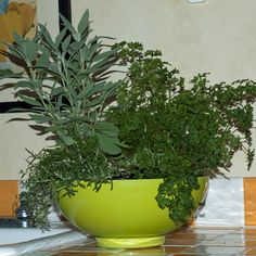 Easy to use culinary herbs