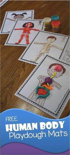 FREE Human Body Playdough Mats - These are such a fun hands on educational activity for kids learning about the human body, skeletal system, muscular system, human body organs, and more. Print in color or black and white and use for homeschool, science projects for kids, preschool, prek, kindergarten, first grade, 2nd grade, 3rd grade, 4th grade, 5th grade, 6th grade, and more! (kids activities, human body activities)