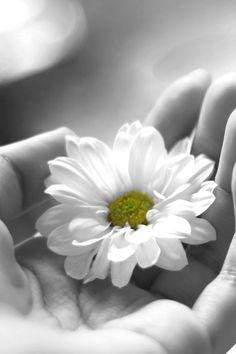 165 best colour flower splash images on pinterest in 2018 black white flower in hand mightylinksfo