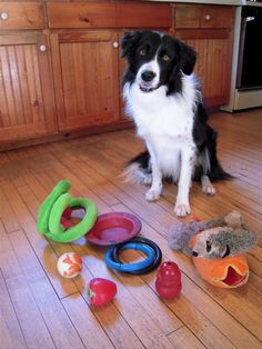 Did you know that dog's tend to see red, blue and yellow? That's why most dog toys are those colours.