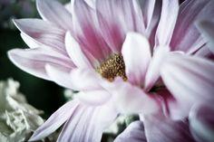 Flower by Jaakko Korhonen Photographs, Flowers, Plants, Fun, Photos, Florals, Plant, Flower, Bloemen