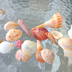 Seashells Panama City Beach Travel Guide