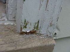 DIY tutorial How to fix damaged or rotten wood trim with putty.