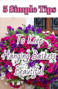 Learn the 5 simple tips to keeping your hanging baskets beautiful all summer long! #hangingbaskets #fertilizer #water #pottingsoil #flowerbasket #containers #flowers #thisismygarden