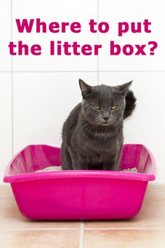 Where to put the litter box? The complete guide for cat owners.