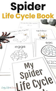 Does your child lover spiders? You'll love this spider life cycle for kids printable book. Download this free printable pack and teach your kids all about the stages of the life cycle of a spider. Cycle For Kids, Biology Lessons, Science Experiments Kids, Life Cycles, The Life, Kids Learning, Activities For Kids, Spider, Science Experiments For Kids