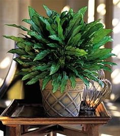 1000 Images About Air Purifying Plants On Pinterest