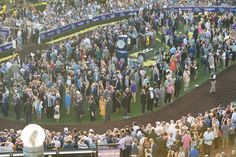 The paddock before the Breeder's Cup