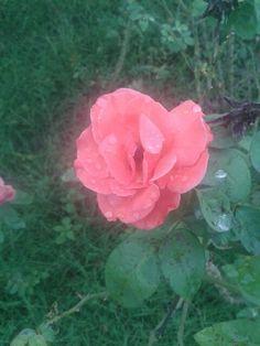 Lövely flower..!!