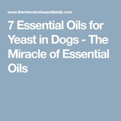 7 Essential Oils for Yeast in Dogs - The Miracle of Essential Oils