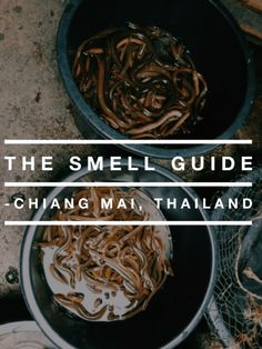 The Smell Guide: Chiang Mai, Thailand--Exploring the multi-faceted feast of smells, food, and soul in the traveler's paradise of Chiang Mai, Thailand, from the delicious to the atrocious.