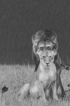 The King & Queen... by Santanu Nandy. °