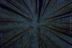 Fotografía de una noche estrellada desde el interior de un bosque de chopos.  Disponible en tamaños estandar para marcos IKEA.