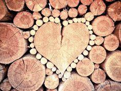 Collection de bois reconnaître herbier bushcraft froissartage scout scoutisme scouting nature forêt