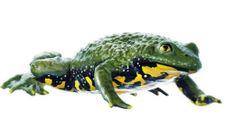 Zoology Models #Zoology #ZoologyModels http://www.gtsimulators.com/Somso-Zoology-Models-Zoological-Models-for-Education-s/89.htm