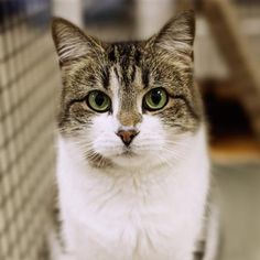 Hello, I'm Mickayla and it's a pleasure to meet you. I was brought to SICSA because my people weren't taking care of me. I need help, guys. I can't seem to find my forever home and I'm starting to think I'll never find one... I've lived with kids over the age of 12 and I loved them. All I really want in life is a family to call mine forever. Do you think you can help me out? I don't take up too much space... Can't I go home with you? Domestic Shorthair/Mix, Age 9 years, Female, Small, Brown