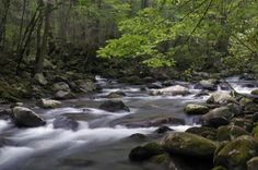 Little Pigeon River in the Great Smoky Mountains National Park