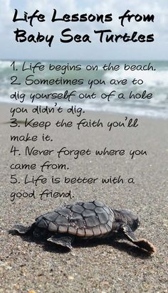 Life Lessons from Baby Sea Turtles