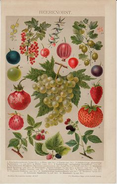 1893 Antique RED FRUIT print of juicy berries, Blackberries, blueberries, strawberries, grapes. Old gorgeous chromolithograph