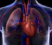Anatomy of the heart of cardiovascular system Heart Institute, Heart Valves, Top Nursing Schools, Science Classroom, Classroom Ideas, Heart Function, School Health, Human Anatomy And Physiology, High School Science