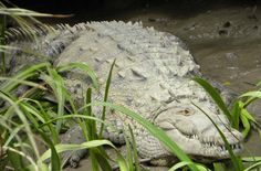 Palo Verde Tour ~ Costa Rica Our family loved this tour.  Book it with this company and you will really enjoy it.