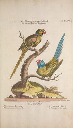 1768   Volumes 8-9   Recueil de divers oiseaux étrangers et peu communs By Georg Leonhart Huth,