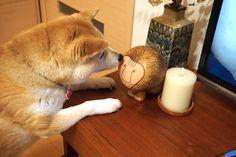 10周年 | 柴犬マコと、