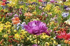 """""""Potranno tagliare tutti i fiori ma non fermeranno mai la primavera"""" (Pablo Neruda)  -  CAPSONI PHOTO BLOG: Aforismi, Frasi celebri e Fotografia    Photo: Esplosione di Primavera © Fabrizio Capsoni  http://capsoni.blogspot.it/2012/03/aforismi-frasi-celebri-e-fotografia.html"""