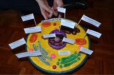 Animal Cell Model Ideas: Cake, Cookies, Pizza & How to Make It 3d Animal Cell Project, Edible Cell Project, Cell Model Project, Cell Project Ideas, Project 3, 3d Plant Cell, Plant Cell Model, Plant And Animal Cells, Biology Projects