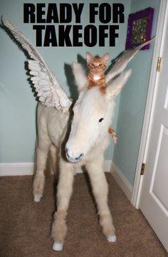 {ready for takeoff!} ginger kitten riding a pegasus. yup.