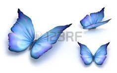 Blue butterfly isolated on white. 3d render.