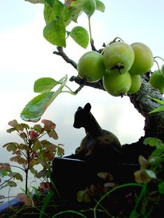 To fawn apple tree Bonsai Fruit Tree, Bonsai Plants, Fruit Trees, Bonsai Mame, Zen Style, Nature Plants, Small Trees, Apple Tree, Ikebana