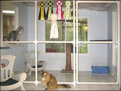 The Wyndabbey Cattery Part General Layout And Interior Design