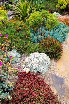 Rock garden succulents; this photo is for people that think water wise gardens are ugly or boring...