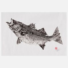 True Striped Bass, $29, now featured on Fab.