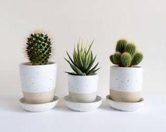 Cactus Pot, Cactus Flower, Flower Pots, Cactus Decor, Plant Decor, Potted Plants, Cactus Plants, Indoor Plants, Cacti
